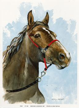 Pony - 6